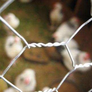 Chicken Netting